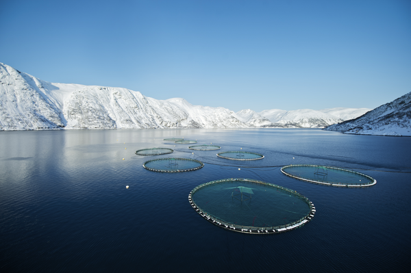 Sea Farms (Credit - Seafood Norway) - Photo:Seafood Norway